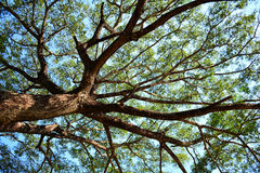 Unter Sunny Tree Lizenzfreies Stockbild