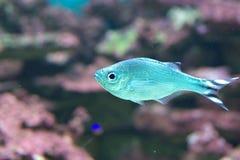 Unter Wasser Lizenzfreie Stockfotos
