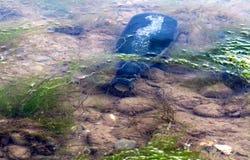 Unter Wasser Lizenzfreie Stockfotografie