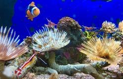 Unter Wasser beauty& x27; s Stockbild