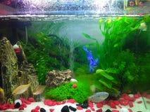 Unter Wasseraquarium Lizenzfreie Stockfotografie
