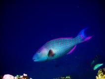 Unter Wasserwelt bei Maldives lizenzfreie stockfotografie