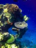 Unter Wasserwelt bei Maldives lizenzfreies stockfoto