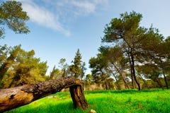 Unterbrochener Baum Stockbild