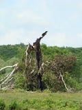 Unterbrochener Baum Lizenzfreie Stockbilder