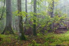Unterbrochener Baum und nebelhafter Standplatz im Hintergrund Stockbild