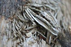 Unterbrochener Zweigabschluß oben Stockfotos