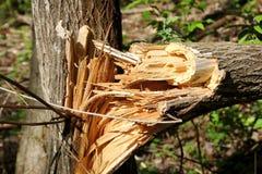 Unterbrochenes Baumkabel Lizenzfreies Stockbild
