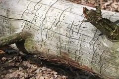 Unterbrochenes Baumkabel Stockbild