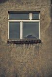 Unterbrochenes Glasfenster Stockfotografie