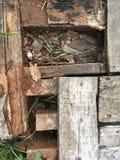 Unterbrochenes Holz Stockbild