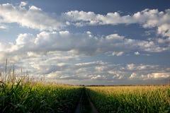 Untergehende Sonne über Maisfeld und Schotterweg, Mittelwesten, USA Lizenzfreies Stockbild