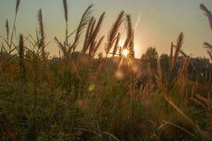 Untergehende Sonne gegen einige Niederlassungen und Büsche Lizenzfreie Stockfotografie