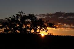 Untergehende Sonne hinter großem Baum Lizenzfreies Stockfoto