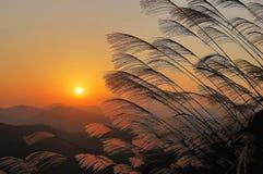 Untergehende Sonne und Schilf wenden auf Lizenzfreies Stockbild