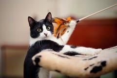 Unterhaltende Katze von Schwarzweiss-Farbspielen stockbilder