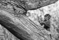 Unterhaltendes Affejunges, das in einer lustigen Haltung steht Lizenzfreie Stockbilder