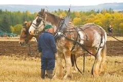 Unterhaltung mit den Pferden. Lizenzfreie Stockfotografie