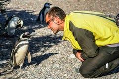 Unterhaltung mit einem Pinguin Lizenzfreies Stockbild