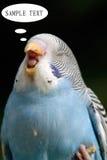 Unterhaltungs-Papagei Lizenzfreie Stockfotos