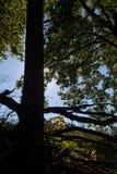Unterholz und Schatten Lizenzfreie Stockfotografie