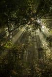 Unterholz und Strahlen der Sonne in Nationalpark Bardia, Nepal Lizenzfreie Stockfotografie