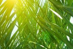 Unterholz von Palmen mit die stacheligen Blätter lang baumeln, die ein natürliches Muster bilden Goldene Sonnenlicht-Strahlen Bot stockfotografie