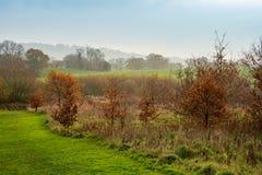 Unterlassungsfelder und Bäume der Winterszene lizenzfreies stockfoto