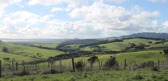 Unterlassungshafen des Weidelands in Kaipara, Neuseeland Stockbild