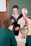 Unterrichtende Biologie Stockfoto