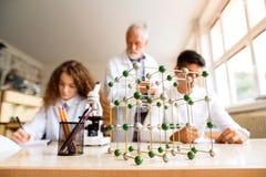 Unterrichtende Biologie des älteren Lehrers zu den hohen Schülern in der Arbeit stockfotografie