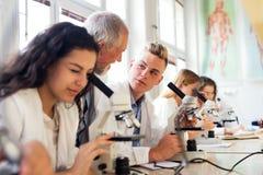 Unterrichtende Biologie des älteren Lehrers zu den Studenten im Labor lizenzfreie stockbilder