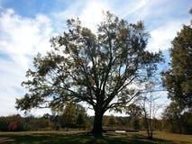 Unterrichtender Baum Stockbild