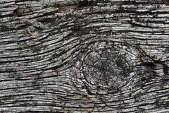 Unterscheidender Woodgrain lizenzfreie stockbilder