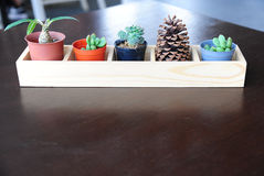 Unterschiedkaktus- und -kiefernkegel im hölzernen Behälter auf Tabelle Stockfoto