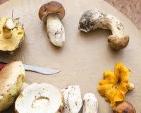 Unterschiedliche Art von Pilzen stockbilder