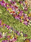 Unterschiedliche Blumen und Apfelmuster Stockfoto
