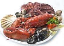 Unterschiedliche Klasse der Meeresfrüchte Lizenzfreie Stockfotos