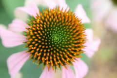 Unterschiedliche Perspektive einer Blume Lizenzfreies Stockfoto