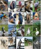Unterschiedliche Tiercollage Stockfotos
