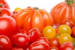 Unterschiedliche Vielzahl der Tomaten Stockfoto