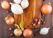 Unterschiedliche Vielzahl der Zwiebeln Lizenzfreie Stockbilder