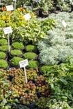 Unterschiedliche Vielzahl von Anlagen in den T?pfen in einem botanischen Markt stockbild