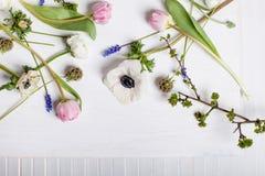 Unterschiedlicher Frühling blüht auf weißem Holz und Fensterladen Stockfotos