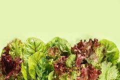 Unterschiedlicher frischer Kopfsalat verlässt auf grünem Hintergrund mit Raum FO stockfoto