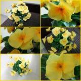 Unterschiedliches Blumenspielzeug Lizenzfreie Stockbilder