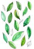 Unterschiedliches grünes Aquarell verlässt auf einem weißen Hintergrund Lizenzfreies Stockbild