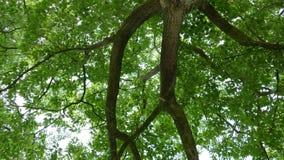 Unterschiedliches vieuw eines alten Baums stockfotografie
