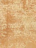 Unterseite einer Birkenbarke Stockfoto