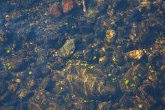 Unterseite von Waldfluß Lizenzfreies Stockbild